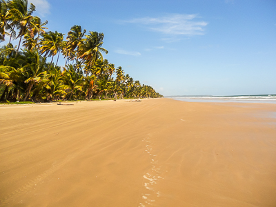 Gran Rivierre Beach - North coast Trinidad