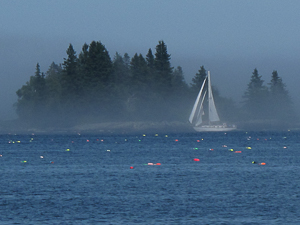 Fog, Tenant's Harbor, Maine